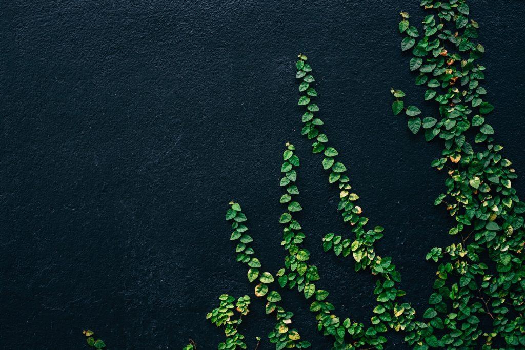 چطور محتوای همیشه سبز تولید کنیم