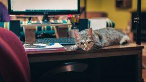 تقویم محتوای خرداد- روز بردن گربه به محل کار